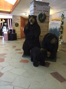 DON'T. FEED. THE BEARS.