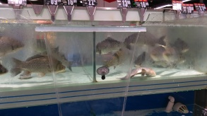 FRESH fish in a supermarket.