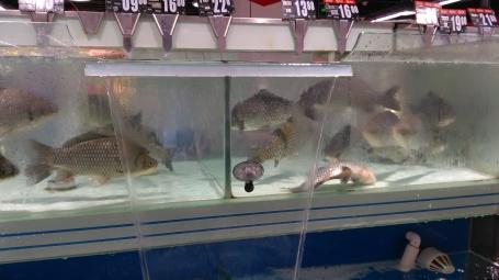 FRESH fish in a supermarket.